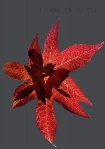 Handful of leaves