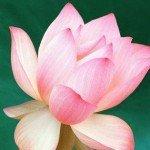 Parables Of Rama By Swami Rama Tirtha